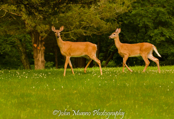 two deer at Kettletown State Park
