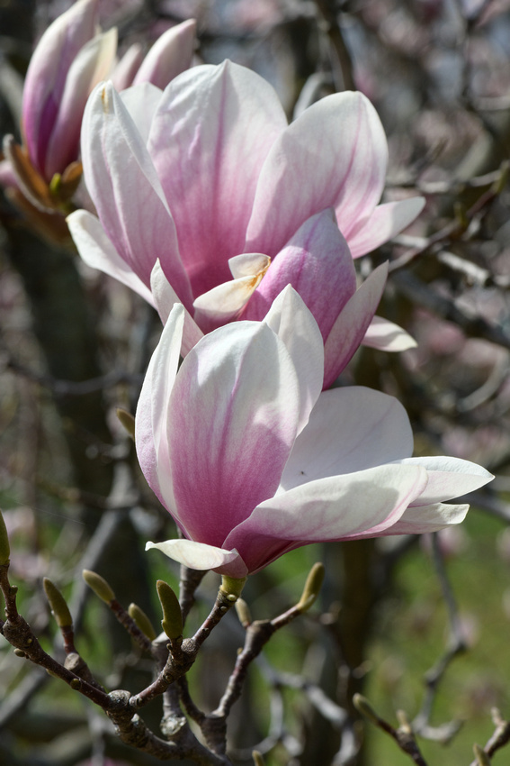 Flowers 4.10.21-138
