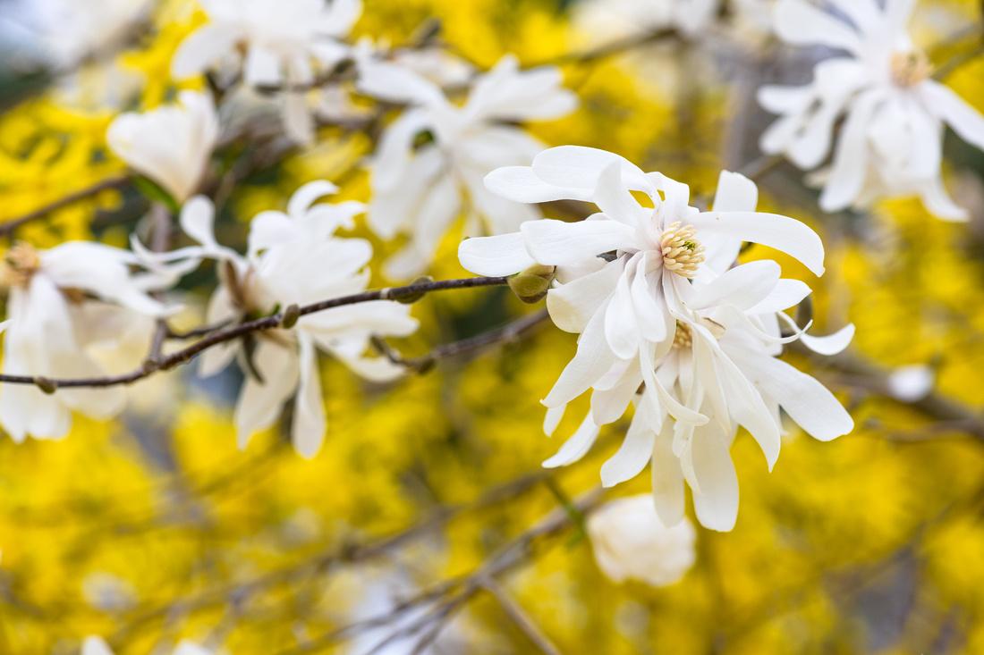Flowers 4.11.21-19