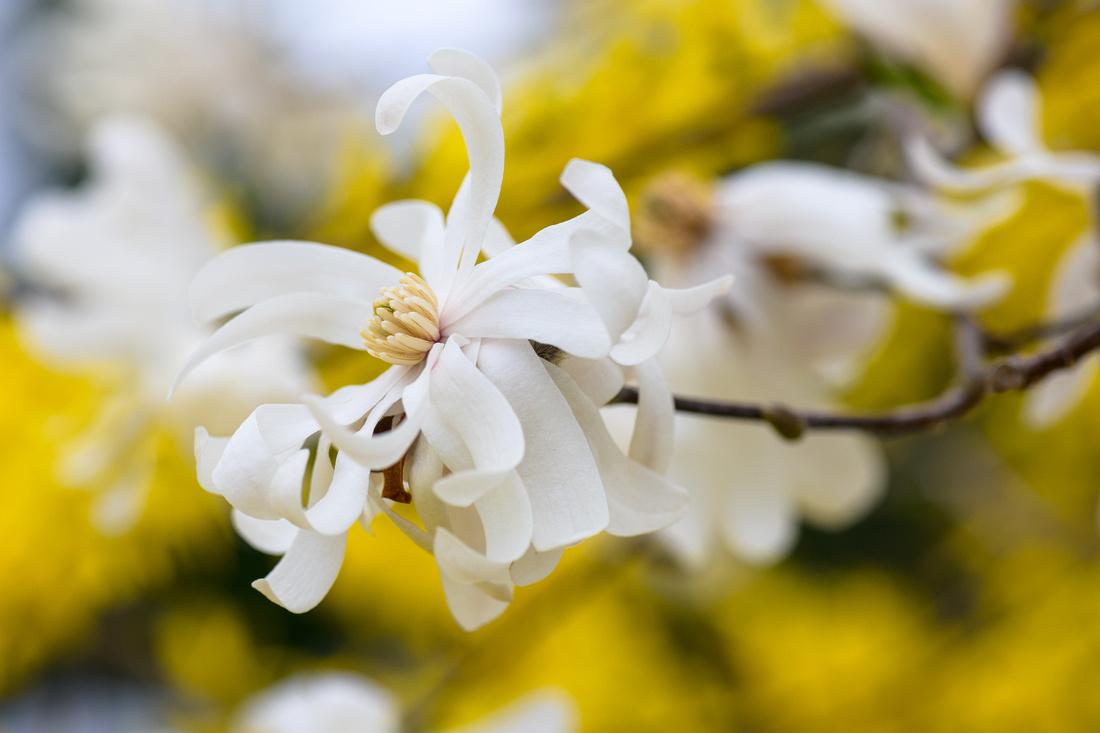 Flowers 4.11.21-30