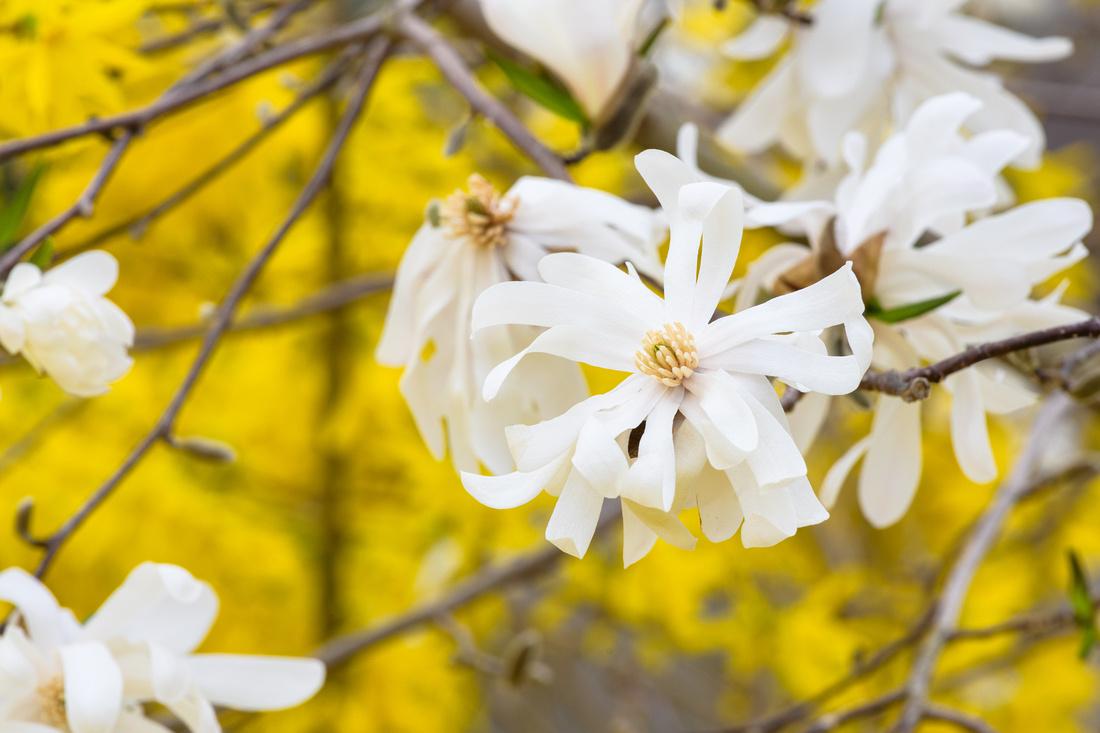 Flowers 4.11.21-163