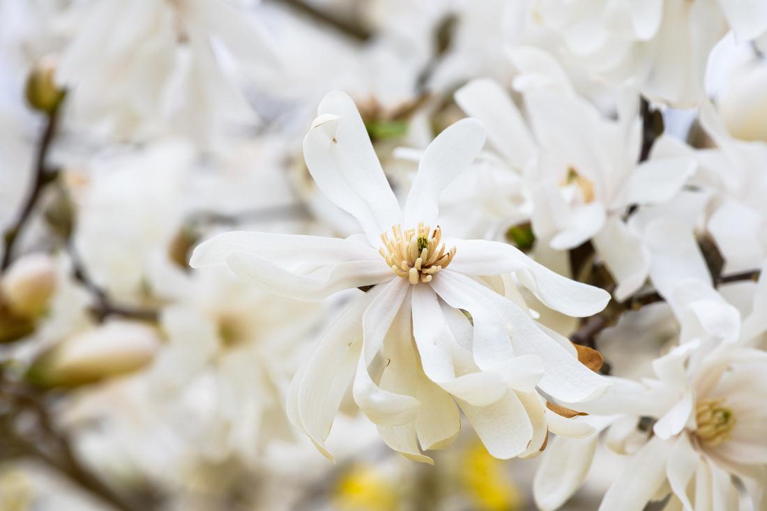 Flowers 4.11.21-165