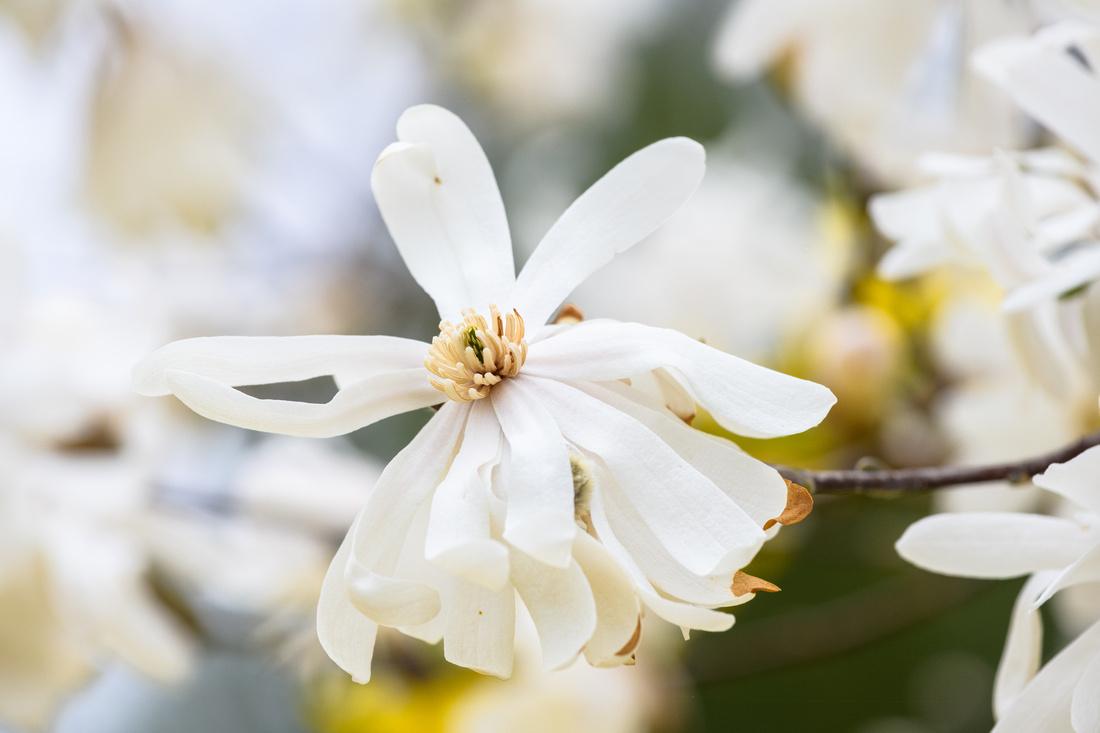 Flowers 4.11.21-189