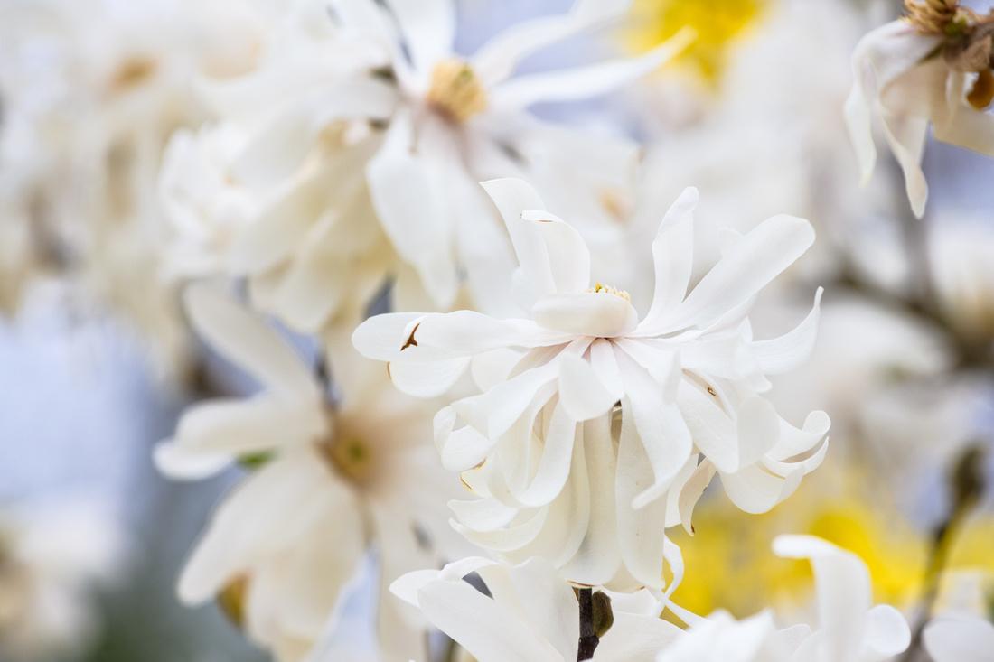 Flowers 4.11.21-191