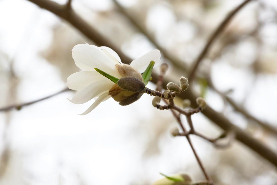 Flowers 4.11.21-220