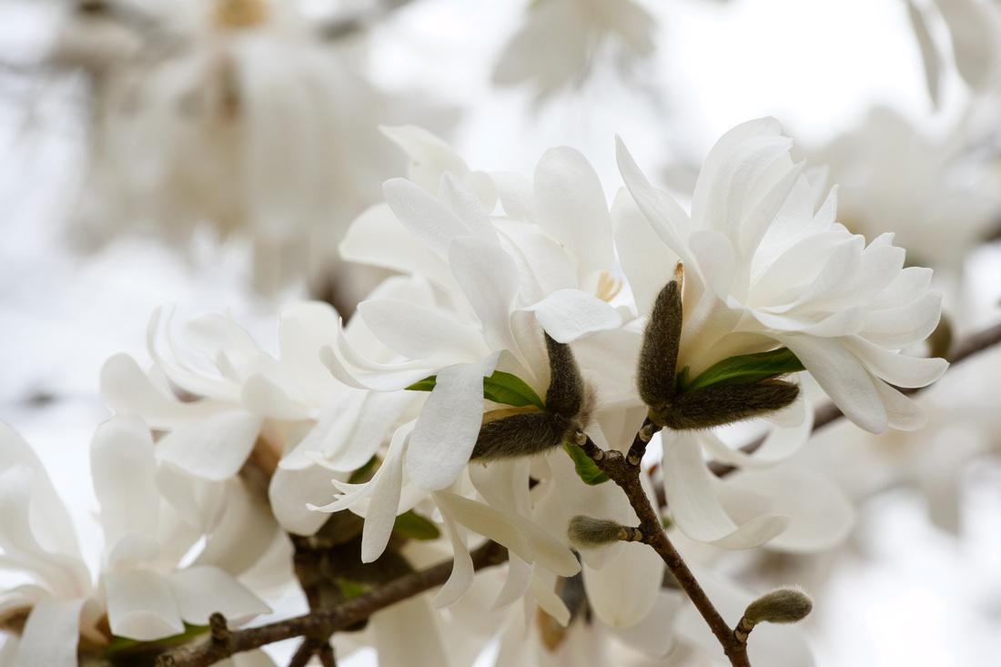 Flowers 4.11.21-224