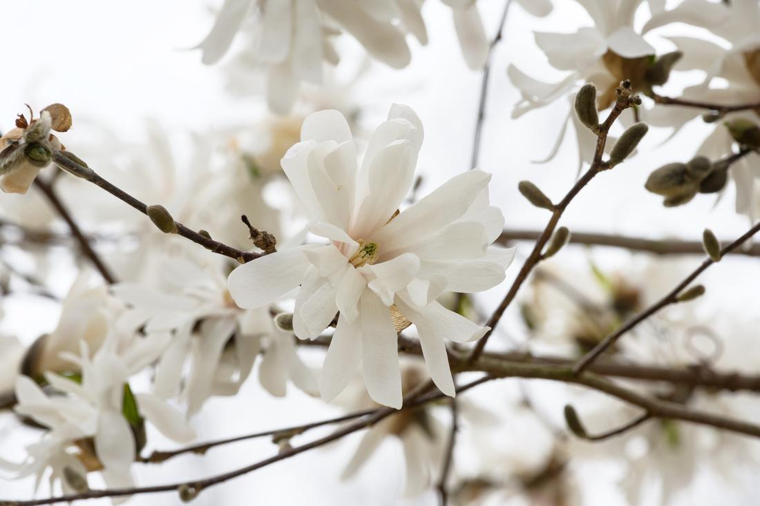 Flowers 4.11.21-226-Edit