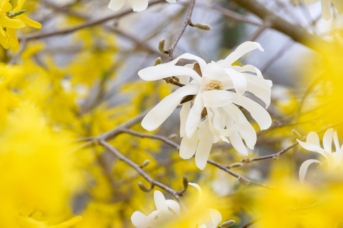 Flowers 4.11.21-235