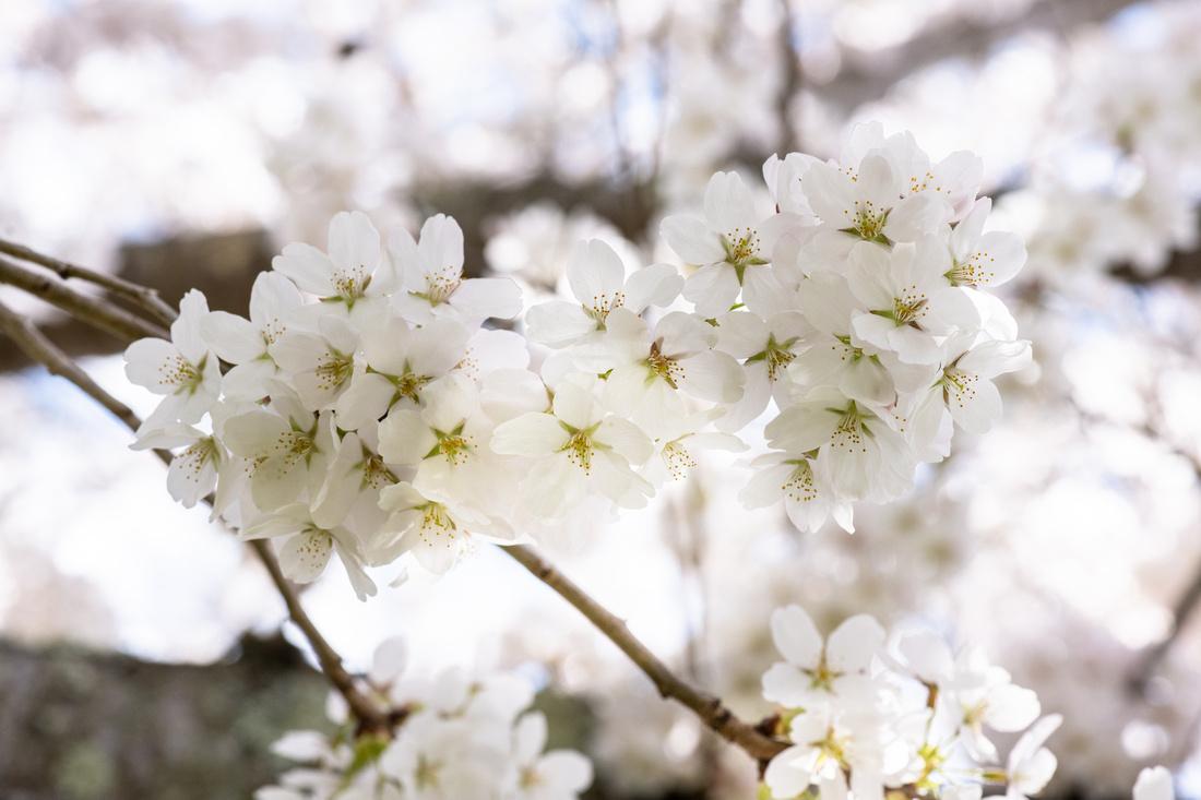 Flowers 4.14.21-17