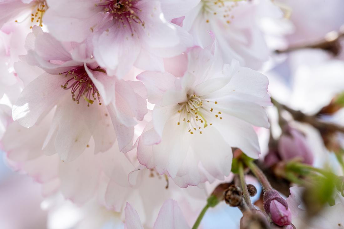 Flowers 4.14.21-33