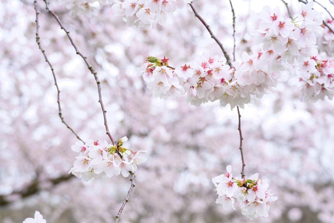 Flowers 4.16.21-3