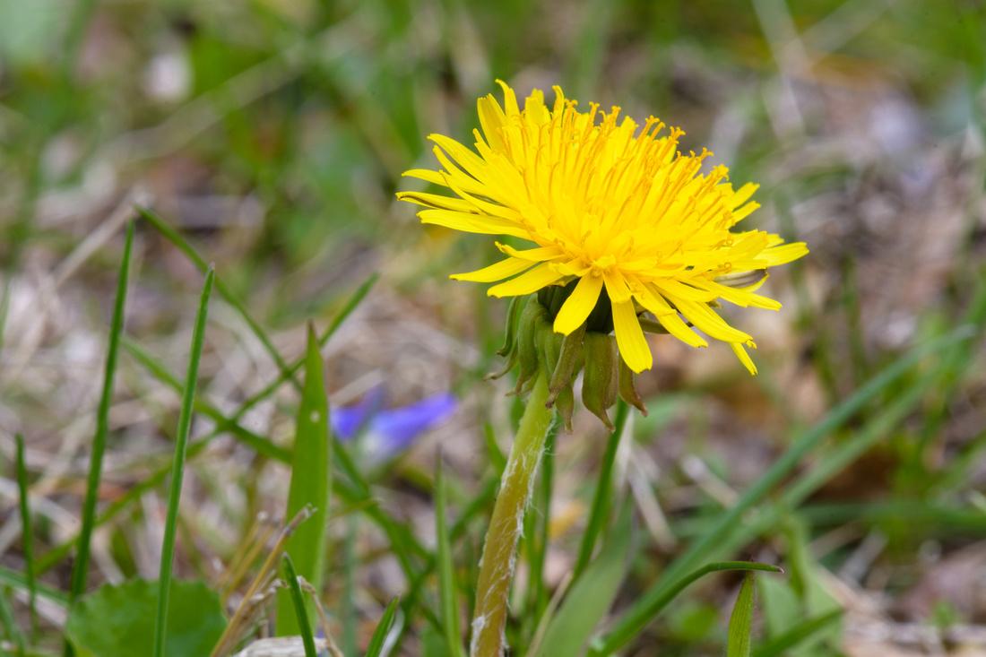 Flowers 4.24.21-9