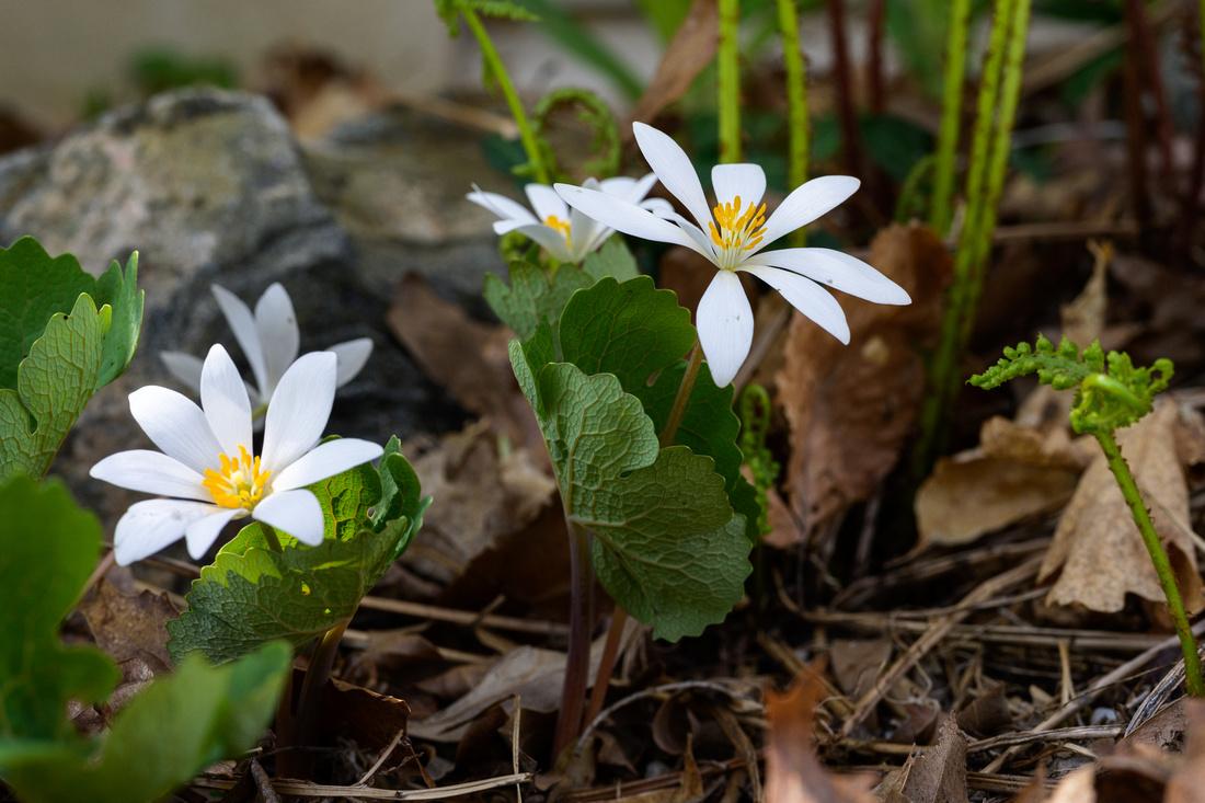 Flowers 4.24.21-29