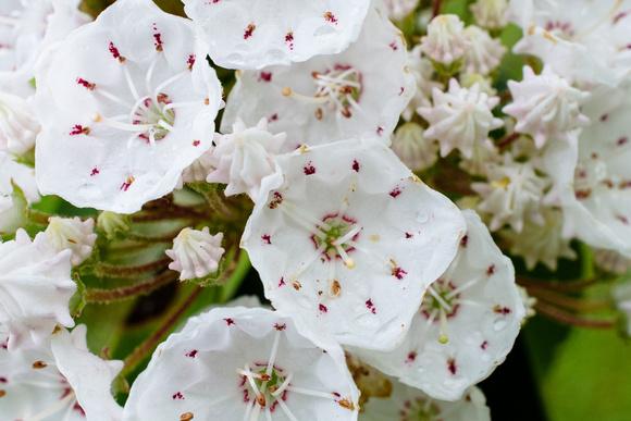 flowers 6.13.17-10