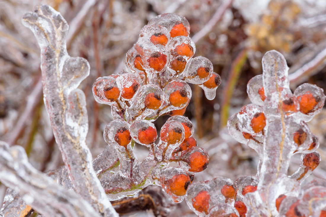 Winter 1.21.19-294