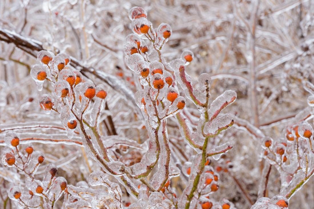 Winter 1.21.19-264