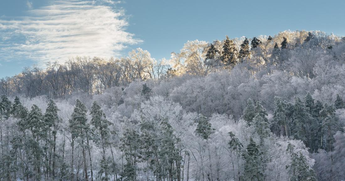Winter 1.21.19-73