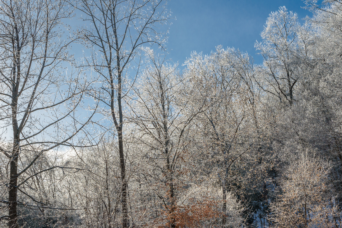 Winter 1.22.19-8