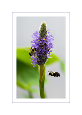 Bees in Flight Greeting Card