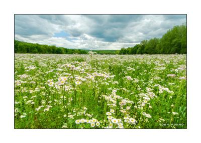 Woodbury Meadow Greeting Card