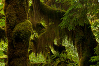 Olympic National Park Photography