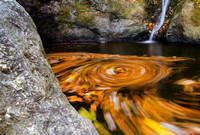 Autumn leaves swirling in the waters of Indian Wells State Park, Derby Connecticut