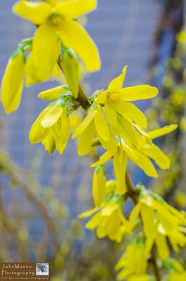 flowers 4.18.15-5