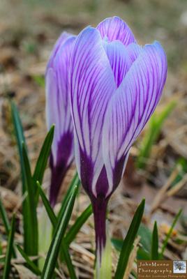 flowers 4.15.15-220022