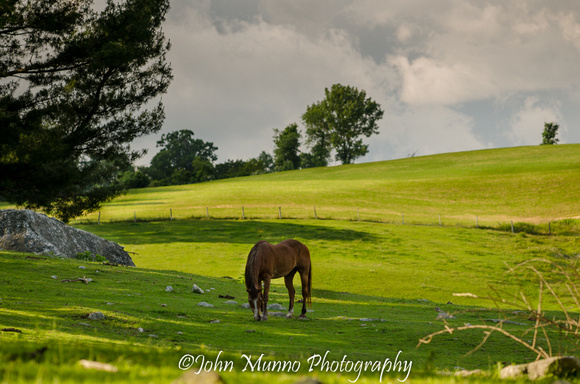 Connecticut horse photography
