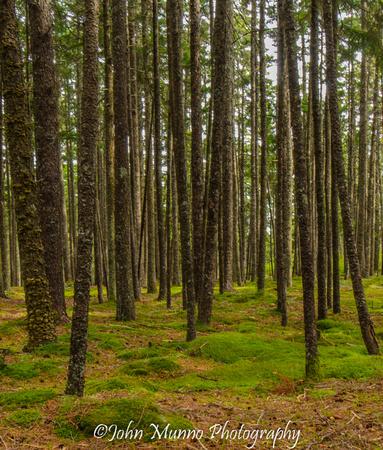 Blackwoods campground, Acadia National Park