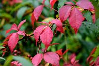 Autumn 10.7.17-185
