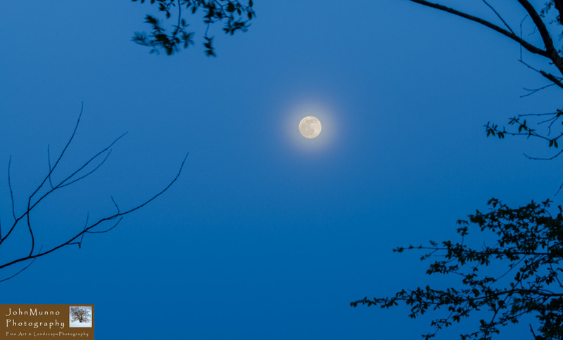 Moon and halo through the trees
